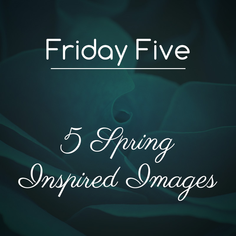 Friday Five: Free Flower Images