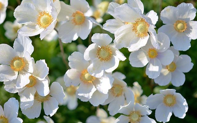 white-167895_640